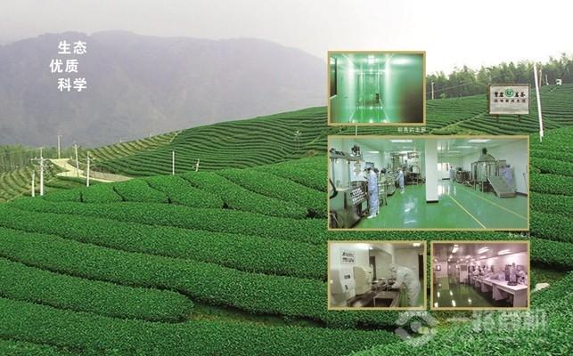 茶葉加盟-鷺巖茗茶