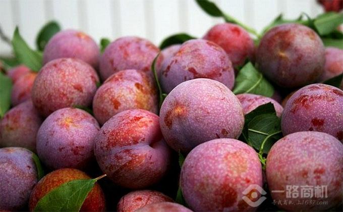 百果园水果