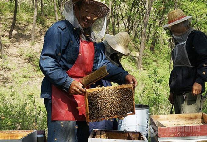 慈生堂蜂蜜生产制作过程