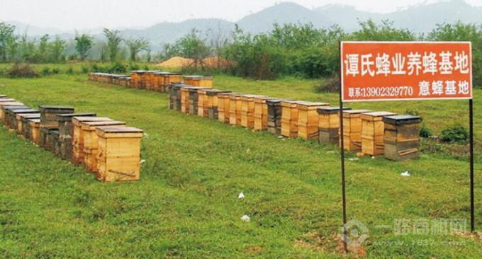 譚氏蜂蜜蜜蜂養殖