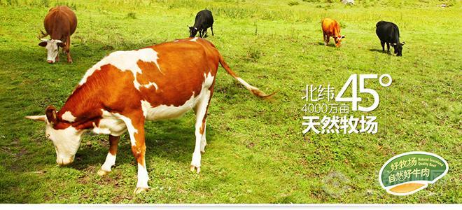 科尔沁牛业