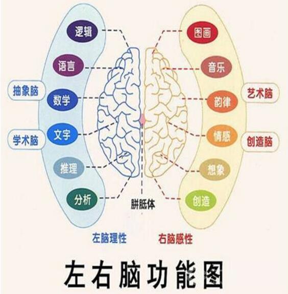全脑开发巨人