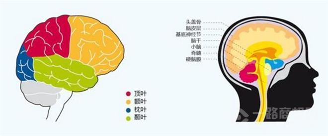 全脑开发巨人加盟