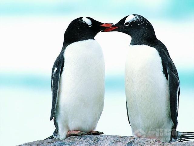 企鵝英語加盟