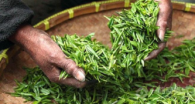 末茶茶饮加盟