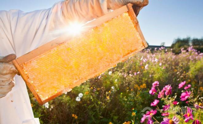 天山的恩賜蜂蜜加盟